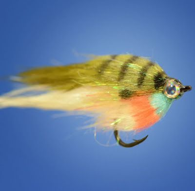 Merchant of the Month: Fly Fish Food - E-commerce - BCW